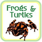 Frogs and Turtles