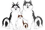Alaskan Malamute family