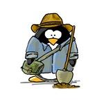 Treasure Hunter Penguin