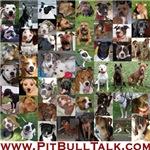 PitBullTalk / General Pit Bull Merchandise