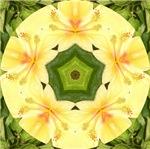 Yellow Hibiscus Square