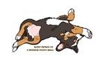 Sleeping Bernese Mountain Dog Puppy (Wide)