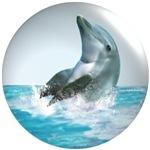 Bubble Dolphin