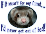 Never Get Out of Bed Ferret