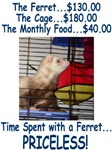 Priceless Ferret