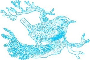 Bird Line Art Blue