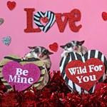 Valentine's Day #10