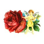 Fairy and Red Rose - Birthday