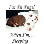 I'm An APBT Angel