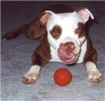 When Life Throws You a Fast Ball .. Fetch It
