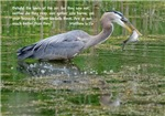 Great Blue Heron # 1