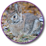 Rabbit Stuff