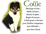 Tri color Collie Puppy Gifts