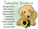 Yellow Labrador Retriever Puppy Love