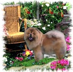 Chow Chow Gifts of Art