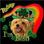 Today I'm Irish Yorkie