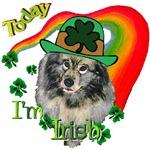 Today I'm Irish Keeshond