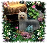 Silky Terrier Gifts Of Art