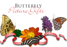 <b>BUTTERFLY PICTURE GIFTS</b>