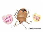 Stink Bug Love