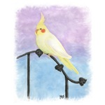 Lutino Cockatiel Watercolor