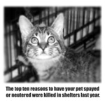Top Ten Reasons Cat
