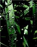 Rain on Blades of Grass