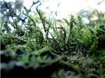 Mossy Tendrils