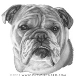 Allie, English Bulldog