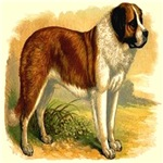 Nobel St. Bernard 1890 Digitally Remastered