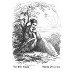 Pedersen's Wild Swans