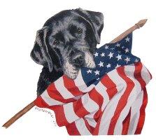 American Veteran, Black Labrador