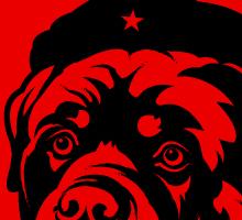 Rottweiler Revolution
