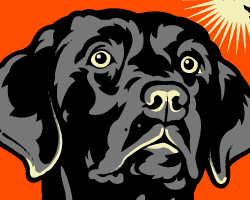 Obey the Black Lab!