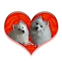 Eskie Love