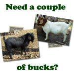 Couple of Bucks