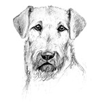 Airedale Terrier Sketch