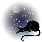 Nocturnal Black Cat II