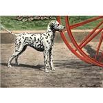 Dalmatian Art