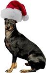 Manchester Terrier Christmas