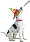 Foxhound Birthday