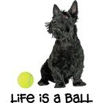 Scottish Terrier Life