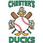 Chester's Ducks