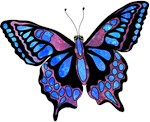 Wild Cool Butterfly