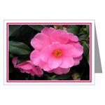 ...Camellia 02...