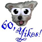60th Birthday Gifts, wide eyed dog & 60, Yikes!