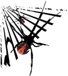 Redback Spiders in Web T-Shirts and Gifts!