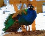 Peacock Impasto Style Photo Art