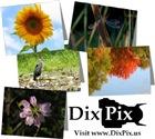 DixPix Photo Cards