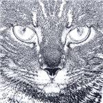 Vigilant Cat